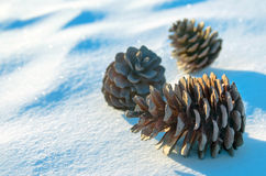 Cones in the snow Royalty Free Stock Images