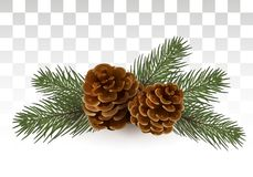 Cones in spruce branches. Christmas composition. A small festive royalty free illustration