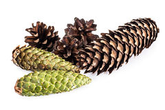 Cones of Spruce, Pine Royalty Free Stock Photos