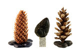 Cones and stones composition. Pine cones and two stones like christmas trees Royalty Free Stock Images