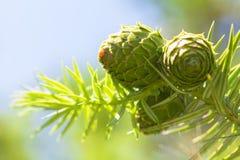 Cones Royalty Free Stock Photos
