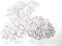 Cones tirados mão do cedro Imagem de Stock