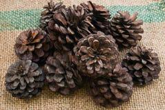 Cones Stock Image