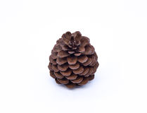 Cones various coniferous trees Royalty Free Stock Photos