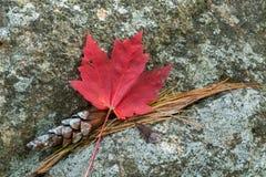 Cones vermelhos da folha e do pinho Imagem de Stock
