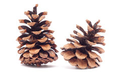 Cones on a white background Royalty Free Stock Photography