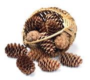 Cones in a wicker basket Stock Photos