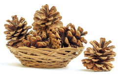 Cones in a wicker plat Stock Images
