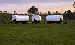 Conestoga Wagons 2 royalty free stock images