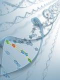 Conexão do ADN Imagens de Stock Royalty Free