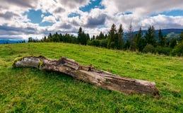 Conexión de decaimiento el prado herboso cerca del bosque imagen de archivo libre de regalías