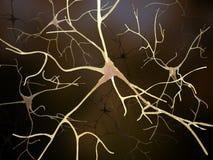 Conexiones neuronales dentro del cerebro humano libre illustration