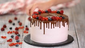 Confectioner decorates with berries a biscuit cake with pink cream and chocolate. Cake stands on a wooden stand on a stock footage