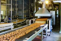 Confectionery factory. Production line of baking cookies. Biscuits on working conveyor belt royalty free stock image