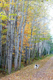 Confederation Trail Stock Photography