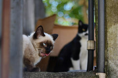 Conference of cats. Two cats are on the wall to talk quietly between looks and actions Stock Photography