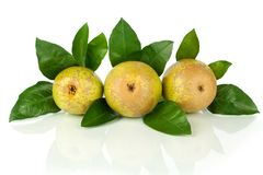 Conference pears with green leaves on white background isolated close up royalty free stock photography