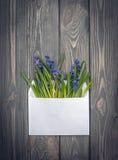 Confession d'amour Une enveloppe avec un bouquet des fleurs Scilla bleu de source Photos stock