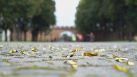 Confetes brilhantes dispersados na pavimentação de pedra filme