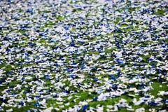 Confetti on a soccer field Stock Image