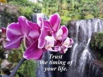 Confiança inspirada das citações o sincronismo de sua vida Com a orquídea roxa bonita e fundo obscuro da cachoeira da natureza imagens de stock royalty free