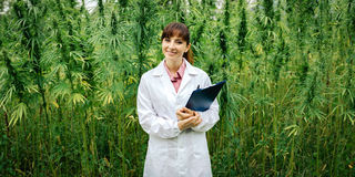 Confident doctor posing in a hemp field. Confident female doctor with clipboard posing in a hemp field, alternative herbal medicine concept Stock Image