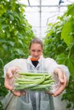 Confident female researcher showing container full of green bean Royalty Free Stock Photography