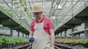 Confident male farmer or biologist checking pots with plants in greenhouse. Portrait of smiling mid-adult Caucasian man