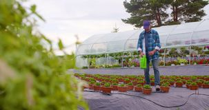 Confident male gardener examining potted flower plant. Dolly shot of confident mature male gardener examining potted flower plant at greenhouse stock video footage