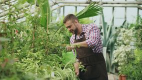 Confident male gardener watering plants at greenhouse with can. Attractive young man enjoy his job in garden. Confident male gardener watering plants at Royalty Free Stock Photos