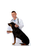 Confident male veterinarian examining dog Royalty Free Stock Images