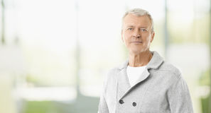 Confident professional man portrait Royalty Free Stock Photography