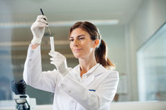 Confident Scientist Examining Test Tube Royalty Free Stock Image