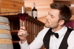 Confident sommelier. Thoughtful young sommelier holding a glass of wine and looking at it while sitting near wine barrel Stock Images