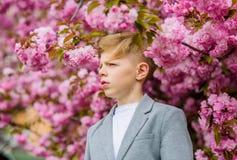 Confident stylish child enjoy warm spring day. Boy fashionable teen posing near sakura. Sakura garden concept. Child. Pink flowers of sakura tree background stock image
