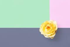 Configuração criativa do plano de vernizes para as unhas brilhantes da forma e do cosmético decorativo em um fundo colorido Estil foto de stock