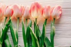 Configuração do plano da mola tulipas cor-de-rosa no fundo de madeira rústico branco f Foto de Stock Royalty Free