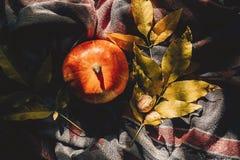 Configuração feliz do plano do Dia das Bruxas ou da ação de graças abóbora de outono com co Fotos de Stock