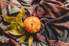 Configuração feliz do plano do Dia das Bruxas ou da ação de graças abóbora de outono com co Imagem de Stock Royalty Free