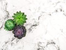 Configuração floral do plano do fundo de mármore suculento imagens de stock