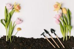 configuração lisa com flores e as ferramentas de jardinagem arranjadas na terra isolada no branco Foto de Stock Royalty Free