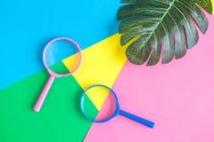 Configuração lisa das lentes de aumento com sumário verde das folhas no fundo colorido fotografia de stock royalty free
