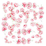 Configuração lisa floral com as flores vermelhas cor-de-rosa no fundo branco, vista superior Imagem de Stock