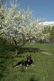 configurações do cão sob uma árvore de florescência fotografia de stock