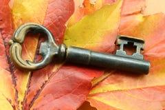 Configurações do indício nas folhas de outono Foto de Stock Royalty Free