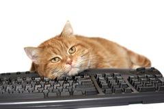 Configurações vermelhas do gato no teclado imagem de stock