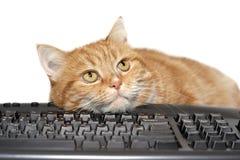Configurações vermelhas do gato no teclado fotos de stock