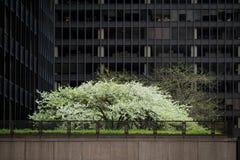 Configuración en Chicago fotografía de archivo