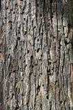 Configuration d'écorce d'arbre Images stock