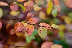 Configuration d'automne avec des lames Photos stock